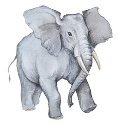 elephant made in the technique of watercolor