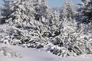 Winter im tschechischen Riesengebirge/Krkonoše