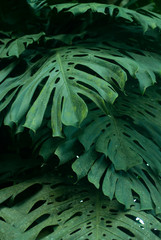 rain forest plants - vegetation of tropical forest