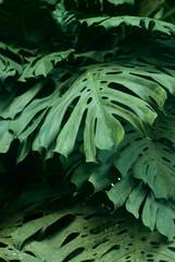 rain forest plants - vegetation of tropical forest