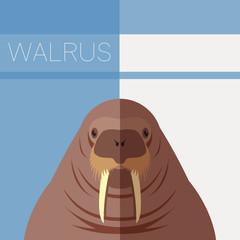 Walrus flat postcard