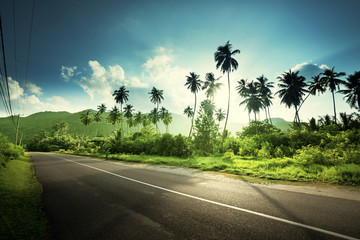 Wall Mural - empty road in jungle of Seychelles islands