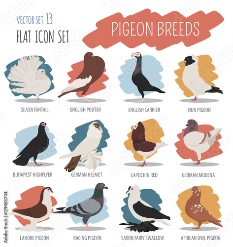"""Poultry Farming. Pigeon Breeds Icon Set. Flat Design"