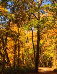 Orange-framed trail