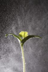 rain fall on plant