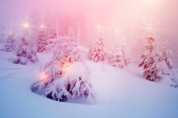 Mystical winter landscape with trees at Christmas lights shine (