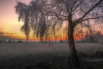 Winter im Teufelsmoor - Worpswede bei Bremen