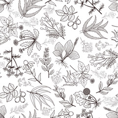 Wall Mural - Vector herbs and spices seamless pattern