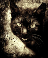 Beautiful grunge vintage photo of black cat, scratched abstract texture background