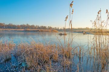Shore of a frozen lake in sunlight in winter