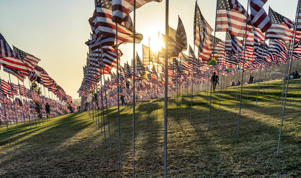 Many US American flags flying, waving on green field