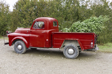 Old vintage red pickup truck carrying a Christmas tree in the be