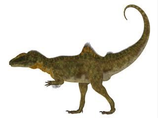 Concavenator Dinosaur Side Profile - Concavenator was a carnivorous theropod dinosaur that lived in Spain in the Cretaceous Period.