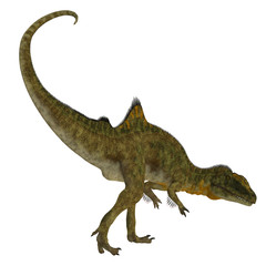 Concavenator Dinosaur Tail - Concavenator was a carnivorous theropod dinosaur that lived in Spain in the Cretaceous Period.