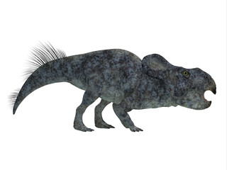 Protoceratops Dinosaur Side Profile - Protoceratops was a herbivorous Ceratopsian dinosaur that lived in Mongolia in the Cretaceous Period.