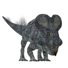 Protoceratops Dinosaur on White - Protoceratops was a herbivorous Ceratopsian dinosaur that lived in Mongolia in the Cretaceous Period.