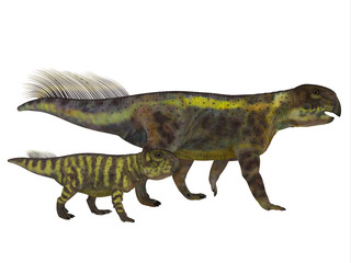 Psittacosaurus Dinosaur with Juvenile - Psittacosaurus was a Ceratopsian herbivorous dinosaur that lived in Asia in the Cretaceous Period.