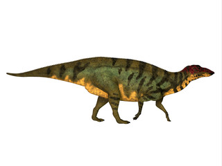 Shuangmiaosaurus Side Profile - Shuangmiaosaurus was a herbivorous iguanodon dinosaur that lived in China in the Cretaceous Period.