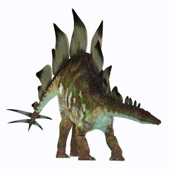 Stegosaurus Dinosaur on White - Stegosaurus was an armored herbivorous dinosaur that lived in North America during the Jurassic Period.