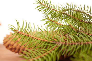 spruce cones on a white background