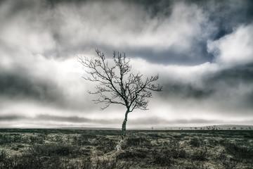 Single tree, Finland, monochrome
