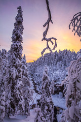 Snow covered trees, Finland