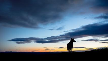 Dog at sunset, Finland
