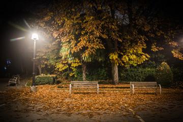 Hojas amarillas secas en otoño, caida de la hoja