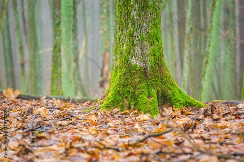 Tree trunk covered by green moss for What is a tree trunk covered with 4 letters