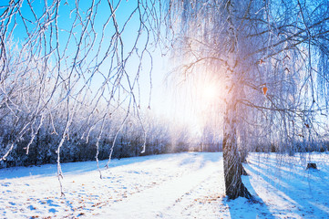 Trees with hoarfrost in winter park at sunrise