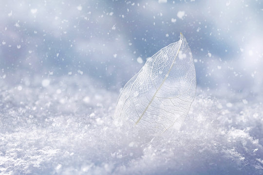 White transparent skeleton leaf on snow outdoors in winter. Beautiful texture, falling snow flakes, soft blurred blue background. Gentle romantic artistic image, Christmas  New Year, close-up macro.