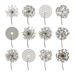 Dandelion flower icons. Dandelions fluffy seeds vector silhouettes
