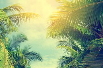 Palm trees against blue sky, Palm trees at tropical coast, vinta