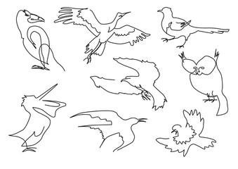 linear sketch birds silhouette set handdrawn