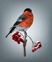 Realistic bullfinch bird on a branch of rowan in the snow. Beautiful vector illustration background with bird bullfinch. Christmas robin bird