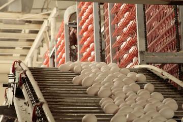 Egg factory...production line