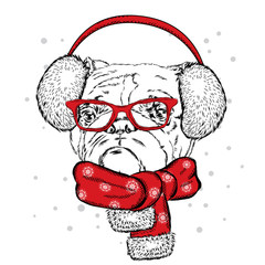 Bulldog in winter headphones. Vector illustration for a card or poster. Print on clothes. Cute puppy. Pedigree dog. Winter holidays. New Year's and Christmas.