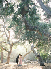 Bride and groom standing under tree, groom kissing bride, rear view