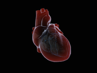 3D render of the human heart.