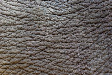 Indian elephant skin