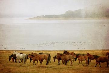 vintage horse picture