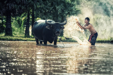 asian farmer with his buffalo