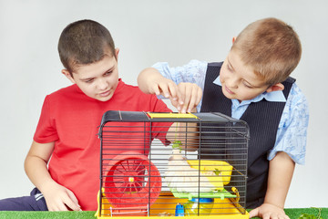 Boys fed hamster in a cage