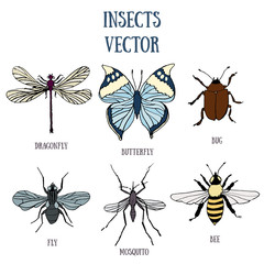 Set of vector colorful insects (butterfly, dragonfly, fly, bug, bee and mosquito) isolated on white background