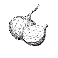 Onion hand drawn vector illustration. Isolated Vegetable engraved style object.