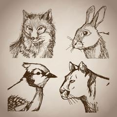 collection animals doodle vintage design vector illustration eps 10
