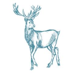 deer sketch blue vintage vector illustration eps 10