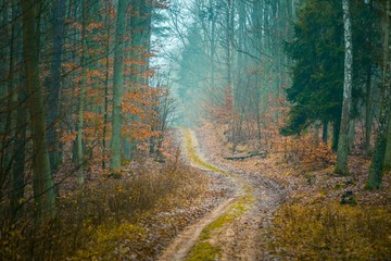 Fall forest with beautiful colors and sandy road