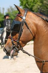 Saddlebred horse head with blinkers