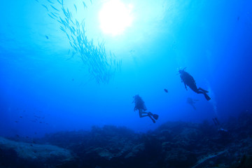 Scuba diving with barracuda fish